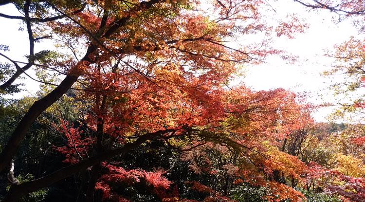 寂光院の紅葉狩り